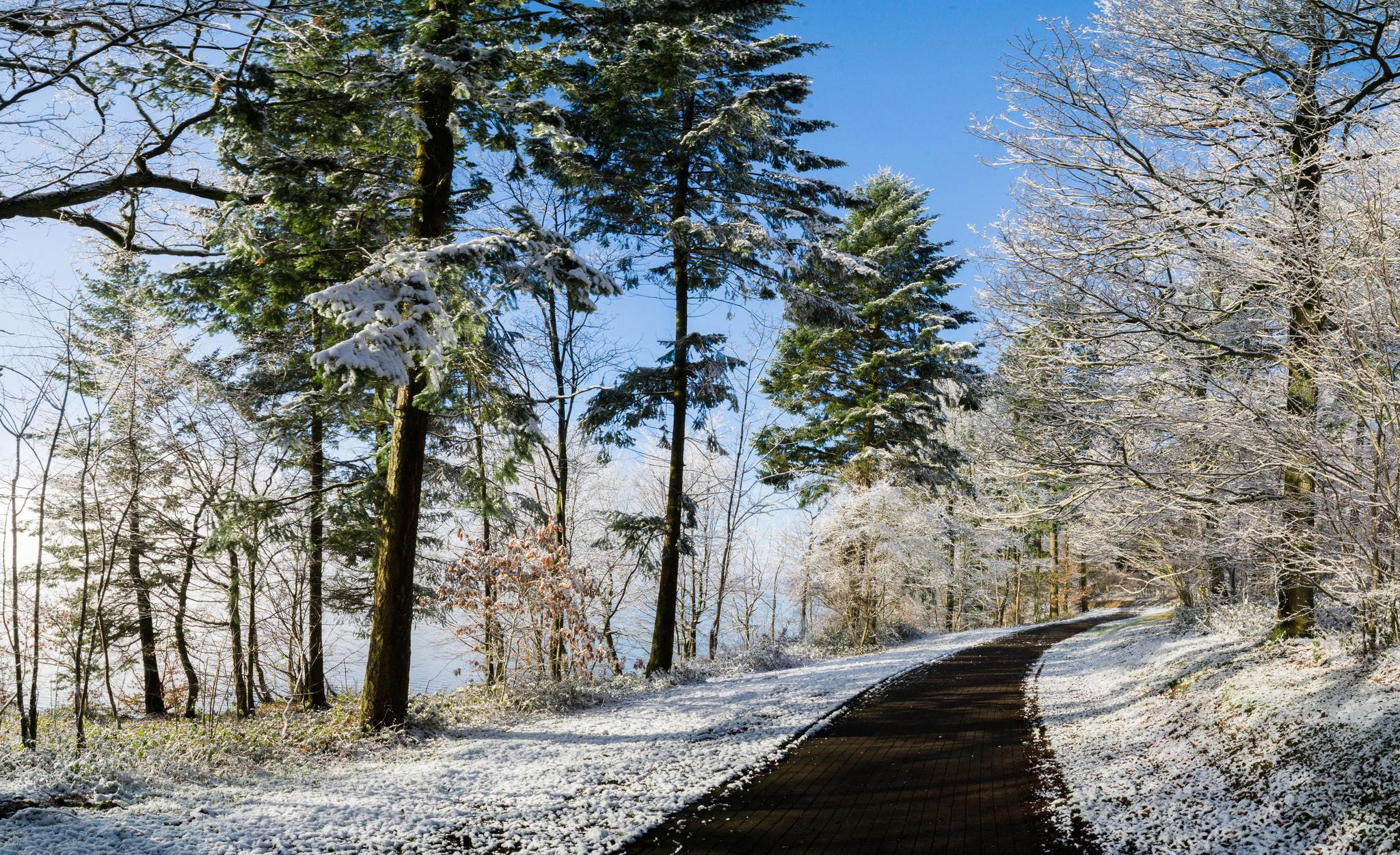обои дорога, деревья, пейзаж картинки фото