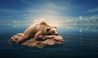Заставки море,бревно,медведь,art