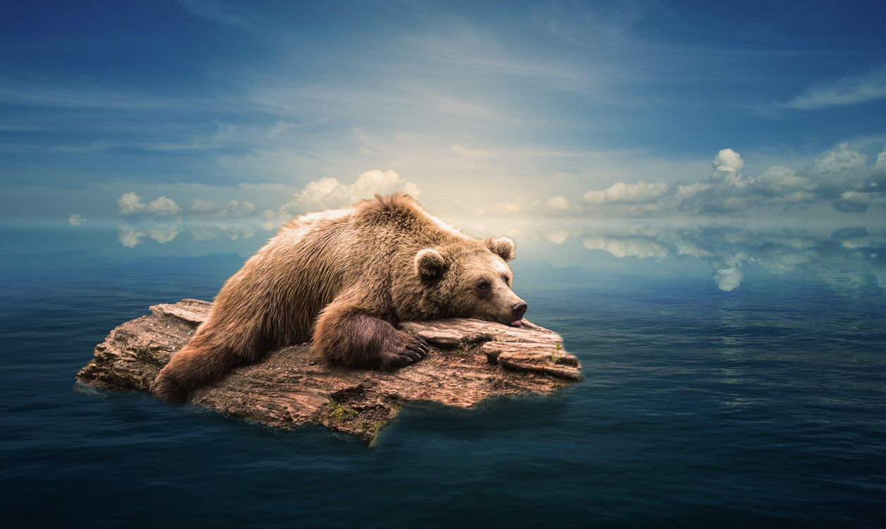 Фото бесплатно море, бревно, медведь, art, рендеринг