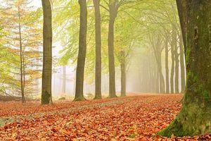 Бесплатные фото осень,лес,деревья,парк,дорога,туман,пейзаж