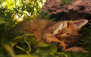 Бесплатные фото спящий котенок