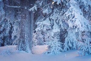Фото бесплатно зимний лес, снегопад, ветви