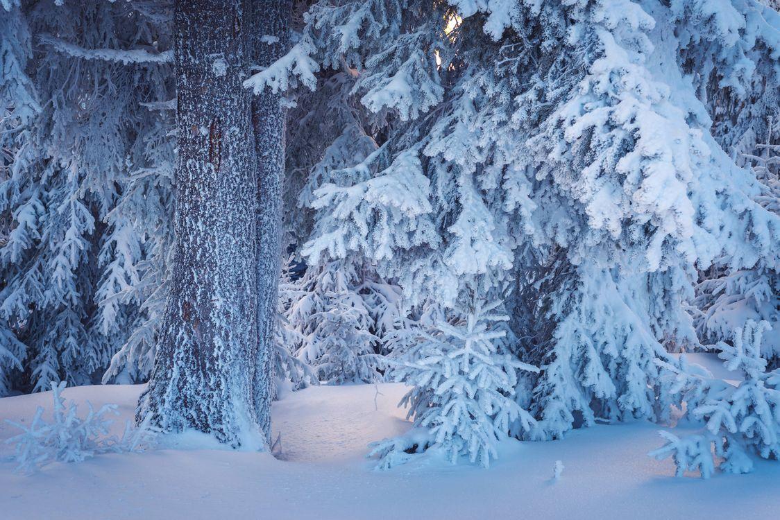 Фото бесплатно зимний лес, снегопад, ветви, сосны, елки, природа