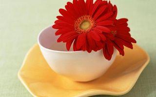 Бесплатные фото блюдце,чашка,белая,цветок,лепестки,бордовые