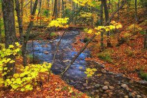 Бесплатные фото осень,лес,река,деревья,природа