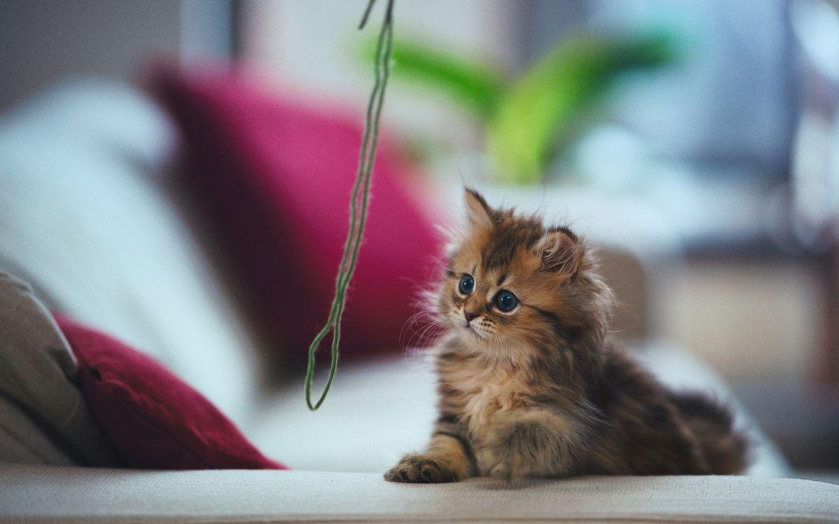 Фото бесплатно диван, котенок, пушистый, морда, лапы, шерсть, нитка, кошки