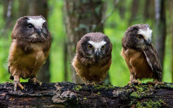 Бесплатные фото совята,глаза,клювы,перья,лапки,дерево