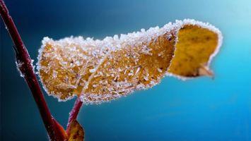 Фото бесплатно листик в инее, поздняя осень, иней