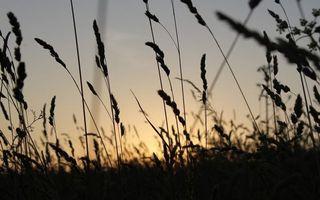 Бесплатные фото поле,трава,колосья,небо,солнце,восход