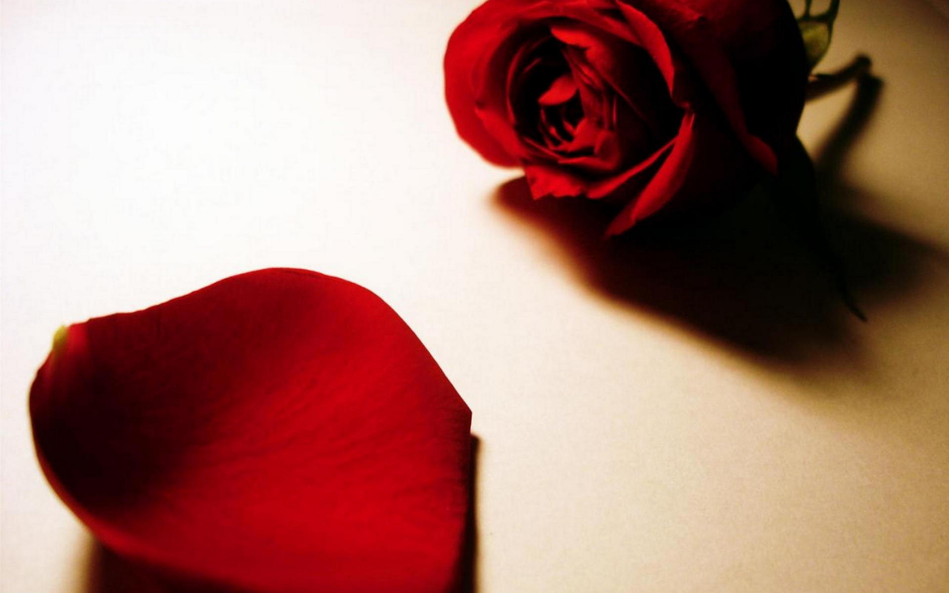 Роза, красная, лепестки, свет, тень ...: fonwall.ru/wallpaper/roza-krasnaya-lepestki-svet.html