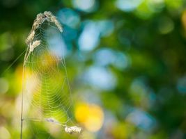 Photo free grass, plant, web