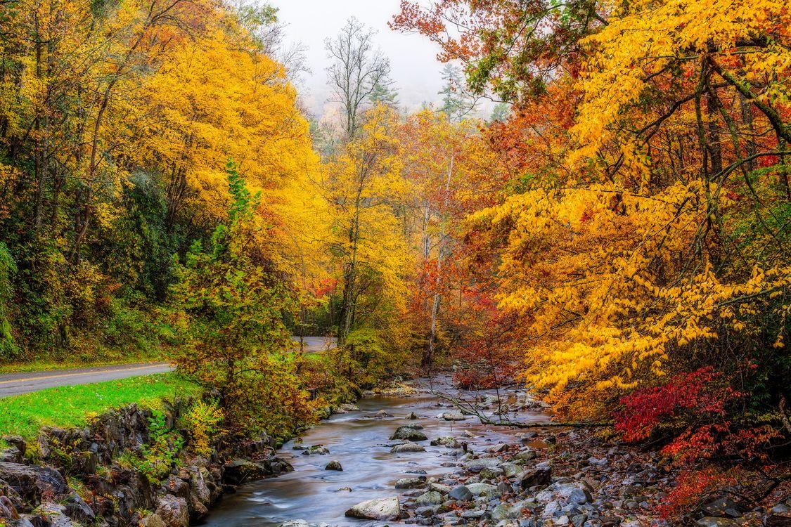 Обои Грейт-Смоки-Национальный парк, штат Теннесси, осень, дорога, река, лес, деревья картинки на телефон