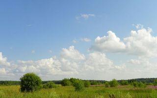 Бесплатные фото лето,поле,трава,кустарник,деревья,небо,облака