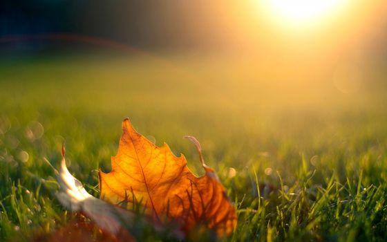 Фото бесплатно лист, желтый, сухой
