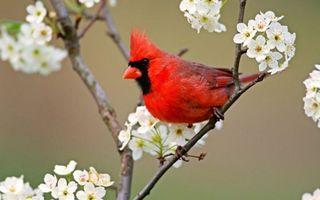 Бесплатные фото птичка,перья,красные,хохолок,клюв,лапки,ветка