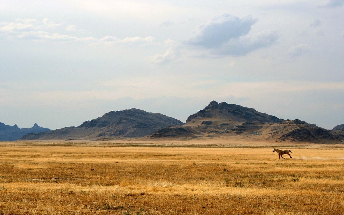 Обои поле, конь, лошадь картинки на телефон