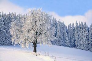 Бесплатные фото зима,лес,деревья,пейзаж