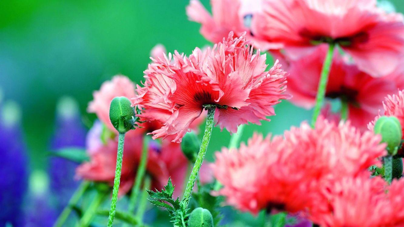 Фото бесплатно лепестки, зеленый, цветы - на рабочий стол