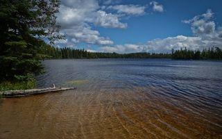 Бесплатные фото река,дно,песок,коряга,берега,деревья,лес