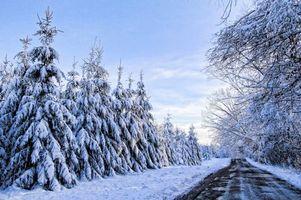 Бесплатные фото зима,дорога,лес,деревья,снег,сугробы,пейзаж