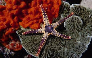 Фото бесплатно морская звезда, кораллы, цветные
