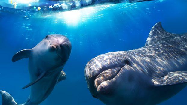 Фото бесплатно дельфины, глаза, плавники