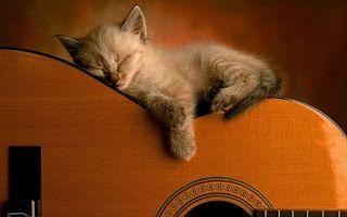 Заставки гитара,котенок,спит,морда,лапы,шерсть
