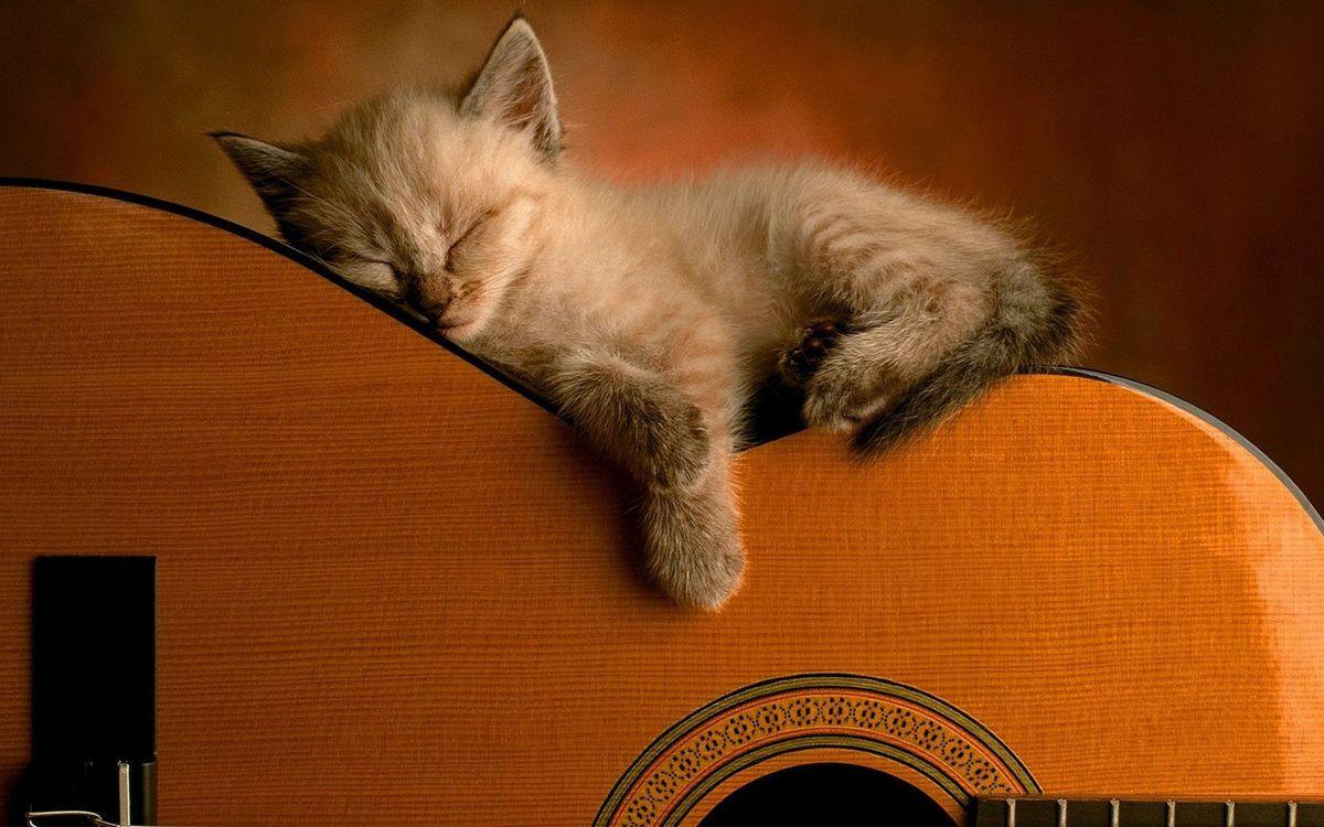 Фото бесплатно гитара, котенок, спит, морда, лапы, шерсть, ситуации