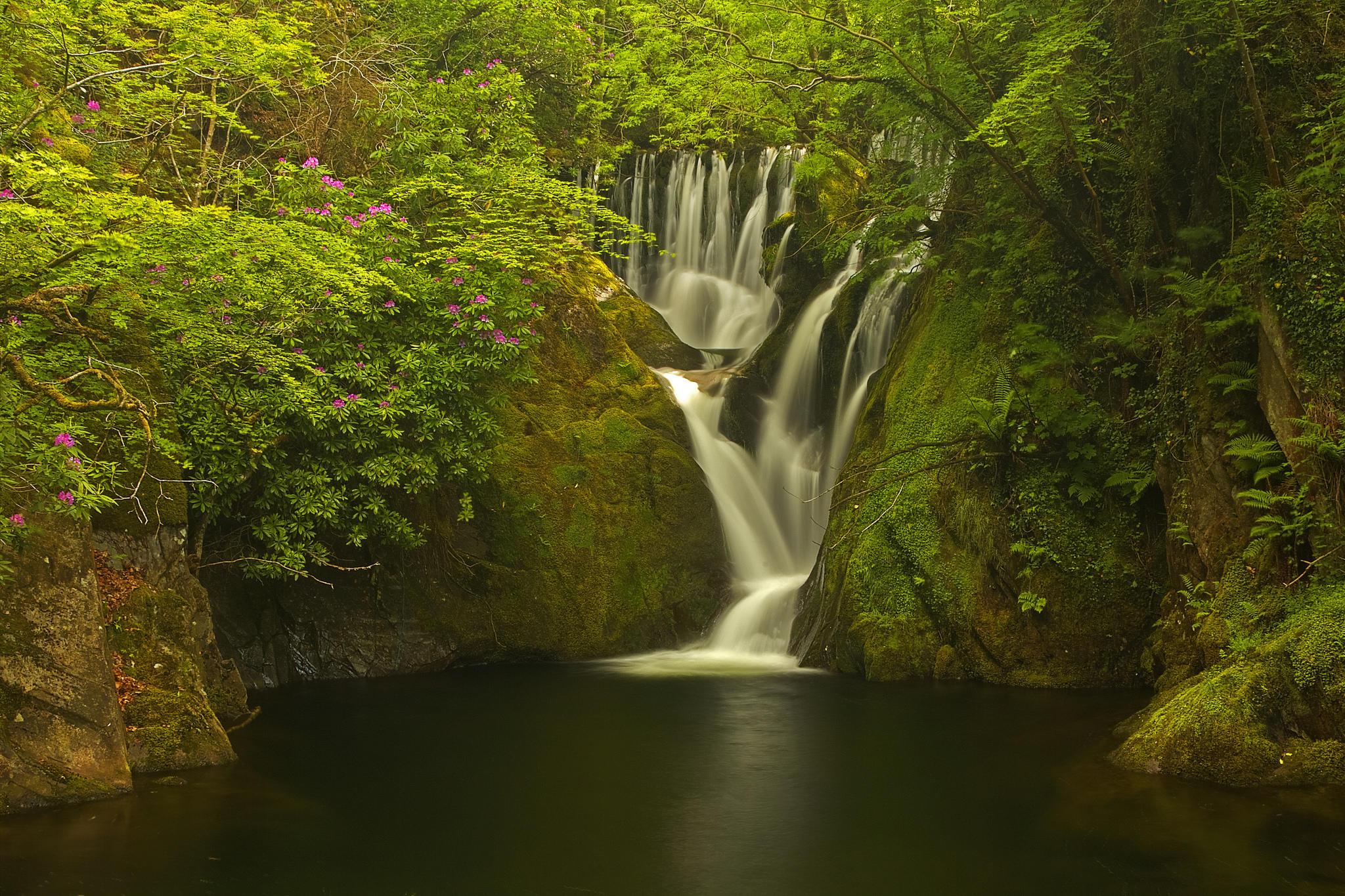 обои Machynlleth, Уэльс, Великобритания, лес картинки фото