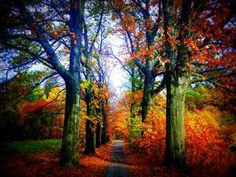 Бесплатные фото осень, парк, дорога, деревья, пейзаж