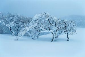 Заставки зима,сугробы,деревья,пейзаж
