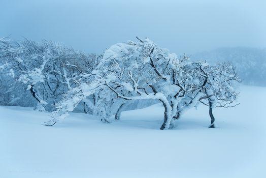 Фото бесплатно зима, сугробы, деревья, пейзаж