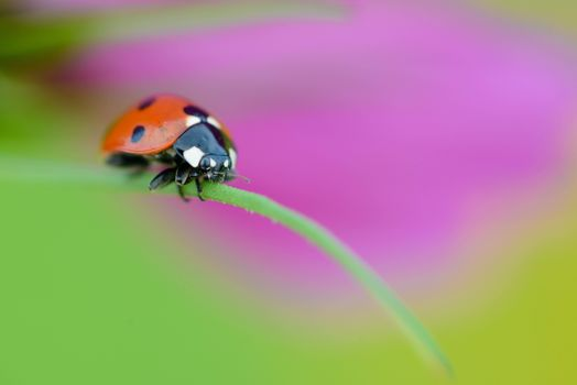 Photo free ladybug, blade of grass, macro
