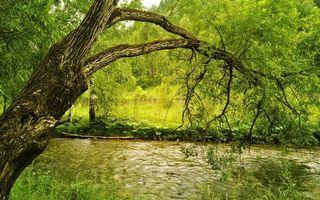 Фото бесплатно лето, деревья, ветви