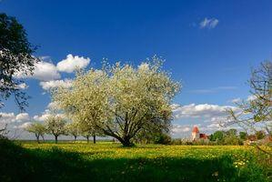 Бесплатные фото поле, весна, деревья, цветение, дома, цветы, пейзаж