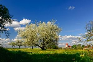 Фото бесплатно поле, весна, деревья