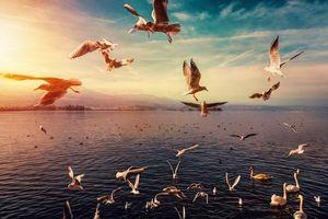 Фото бесплатно закат, чайки, озеро