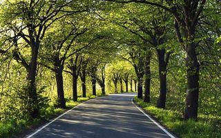 Бесплатные фото дорога,асфальт,разметка,деревья,кустарник,трава