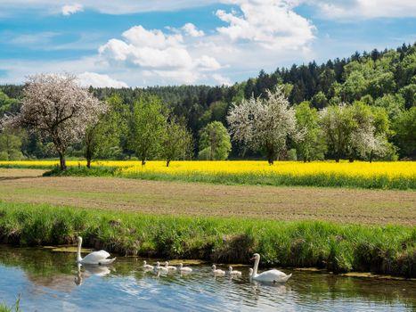Photo free field, pond, trees