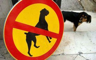 Бесплатные фото ступеньки,собака,морда,взгляд,знак,запрет