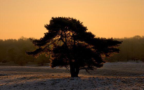 Бесплатные фото деревья,крона,земля,первый,снег,небо