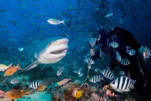 Фото бесплатно море, рыбы, акула