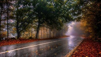 Бесплатные фото осень, дорога, деревья, пейзаж