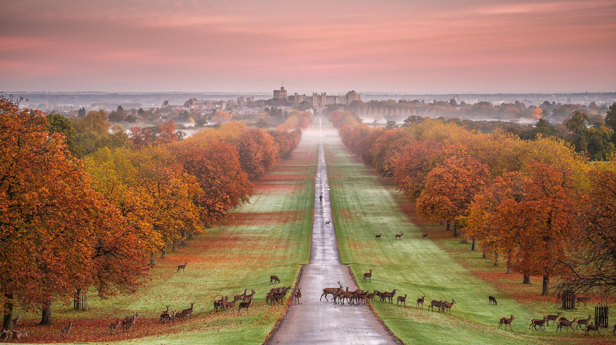 Обои Виндзорский замок, Windsor Castle, Виндзор, графство Беркшир