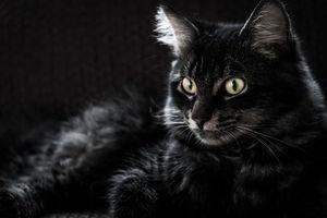 Бесплатные фото кот,кошка,взгляд