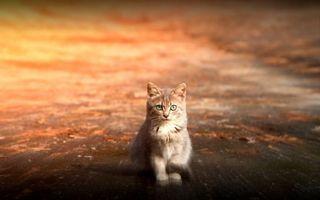 Фото бесплатно котенок на дороге, минимализм, пушистый