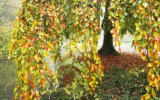 Бесплатные фото осень,деревья,ветви,листва,цветная,трава