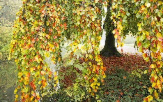 Фото бесплатно осень, деревья, ветви, листва, цветная, трава