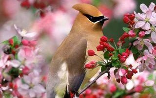 Бесплатные фото птица,хохолок,клюв,перья,ветка,цветы,листья