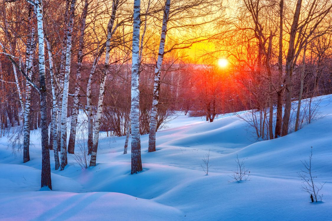 Фото бесплатно зима, закат, снег - на рабочий стол